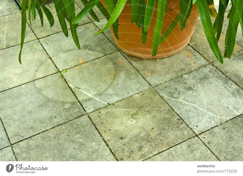 Verrückter Blumentopf Pflanze Garten Kreis Spuren Quadrat Palme Terrasse Gartenbau Sauerstoff Grünpflanze Bodenplatten Abdruck Topfpflanze