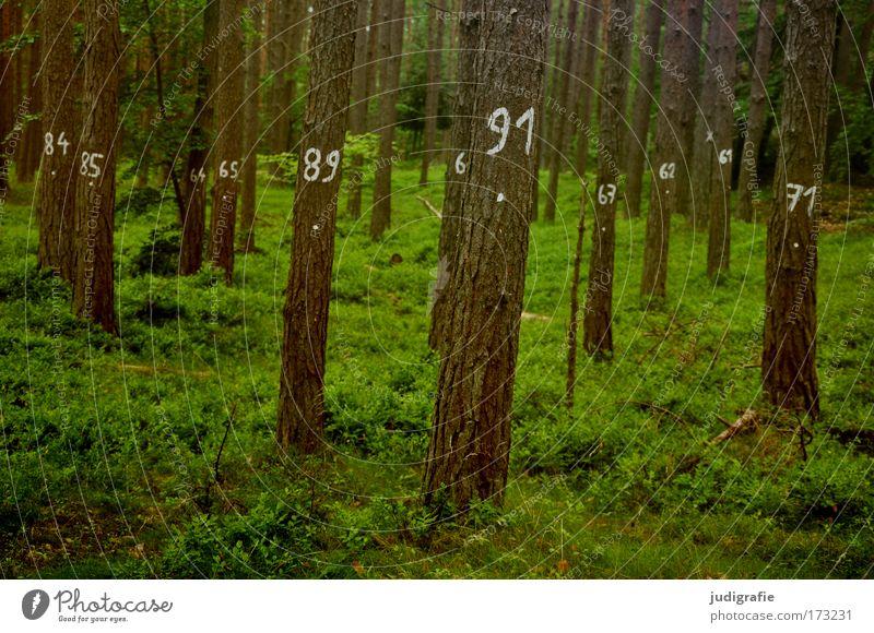 Baumzählung Farbfoto Außenaufnahme Tag Landwirtschaft Forstwirtschaft Umwelt Natur Landschaft Pflanze Sommer Gras Moos Wald Zeichen Ziffern & Zahlen grün