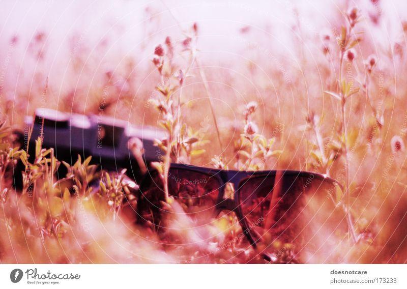 Selbstportrait. Pflanze Blume Gras Wiese außergewöhnlich trendy blau analog praktica Cross Processing sensia Sonnenbrille Fotokamera diana+ Coolness Stil Natur