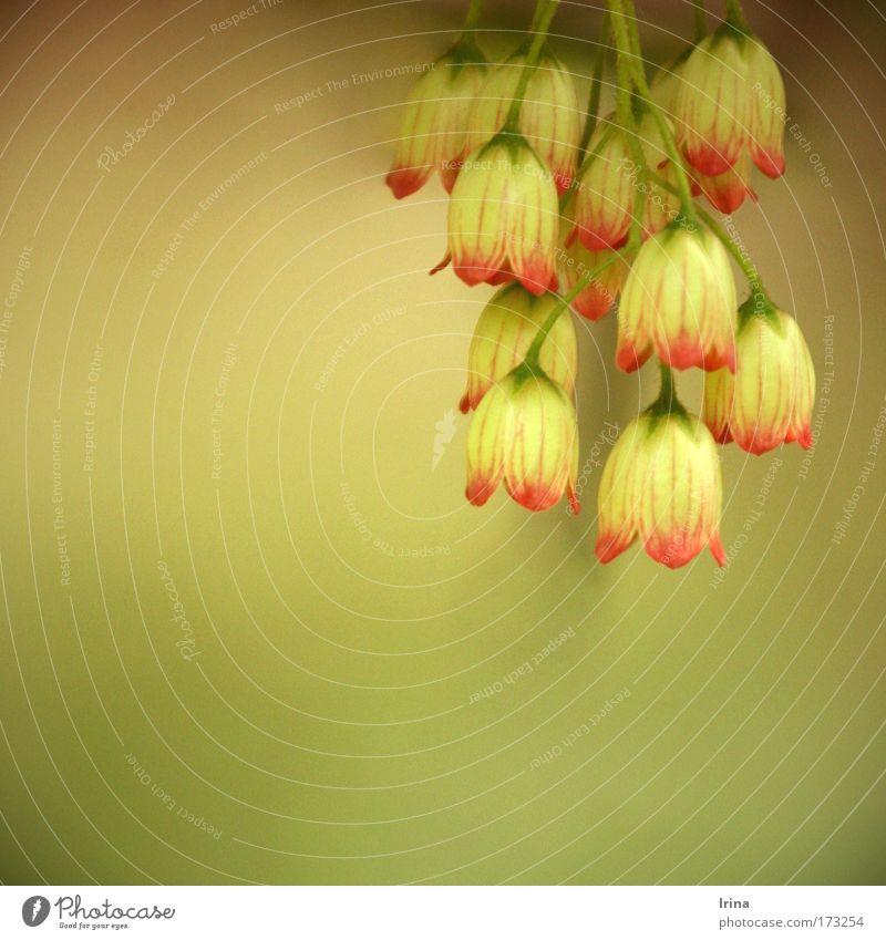 Jingle Bells Natur grün Pflanze rot Blume Sommer ruhig gelb Blüte Wärme Park braun gold Hintergrundbild natürlich Sträucher