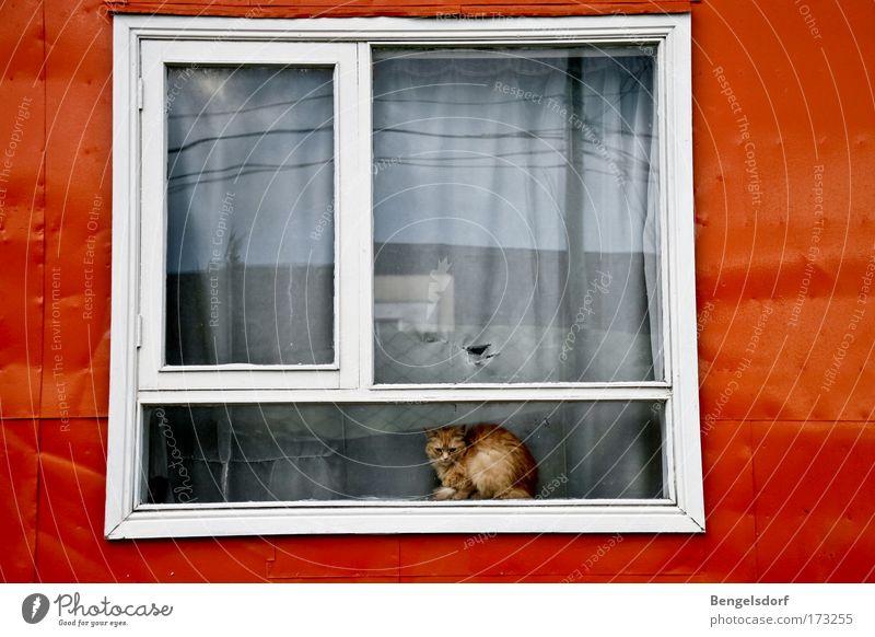 The other side of the world II Fenster Fensterbrett Tier Haustier Katze 1 Einsamkeit kalt Langeweile Leben Verbote Verzweiflung Zeit Traurigkeit Farbfoto