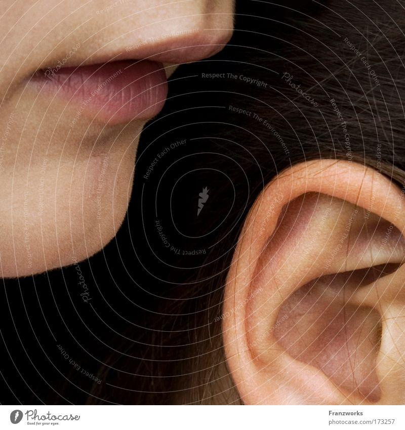 Mundmuschel Mensch sprechen Haare & Frisuren Familie & Verwandtschaft Freundschaft Haut Kindheit Ohr Kommunizieren Lippen Neugier berühren geheimnisvoll hören