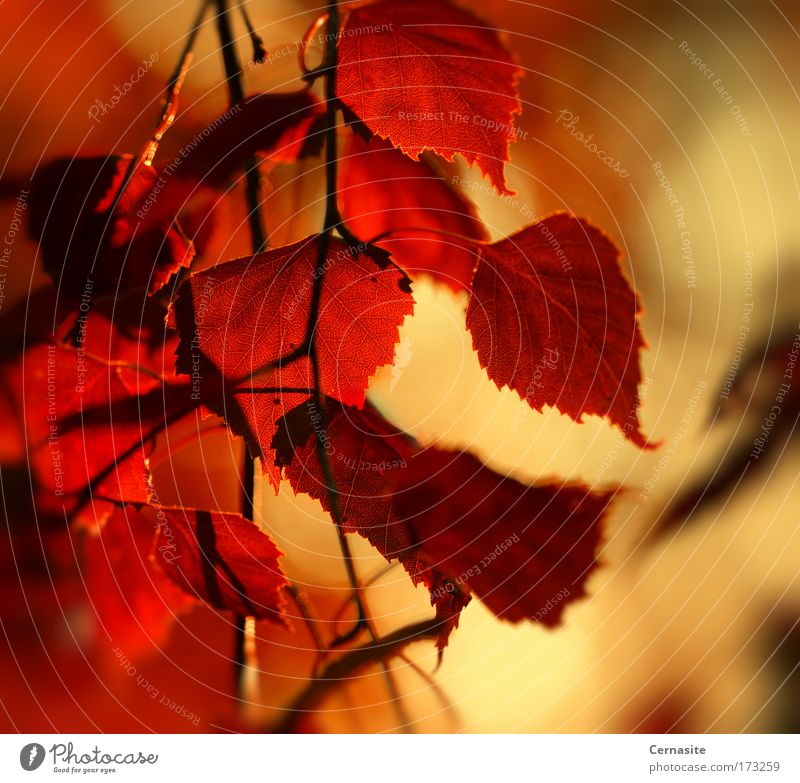 Ruhig Farbfoto mehrfarbig Außenaufnahme Nahaufnahme Detailaufnahme abstrakt Menschenleer Dämmerung Schatten Kontrast Silhouette Reflexion & Spiegelung