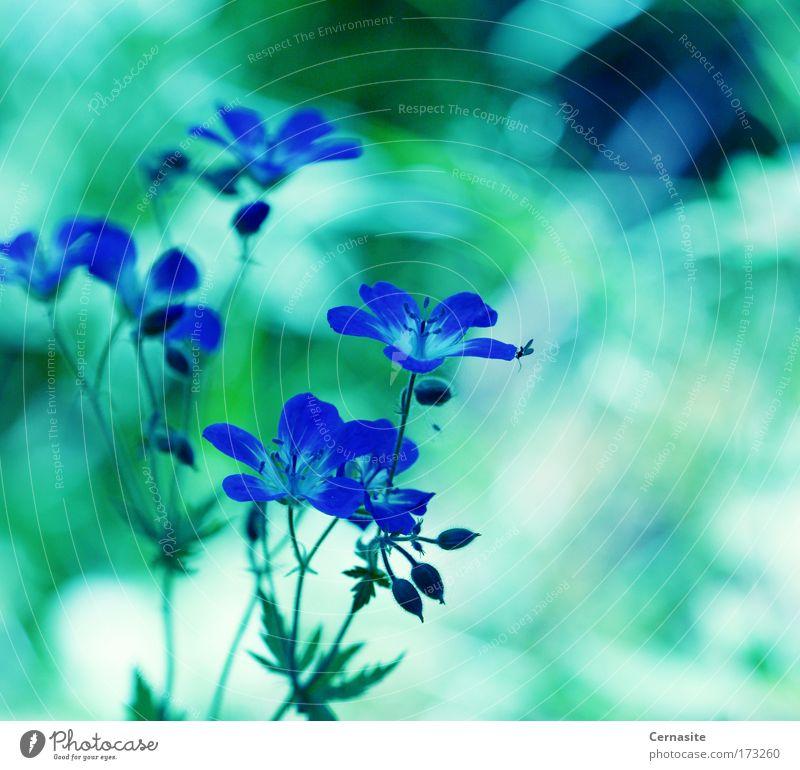 Natur blau grün schön Pflanze Sonne Sommer Blume schwarz Umwelt Landschaft Wiese Wärme Blüte hell Feld