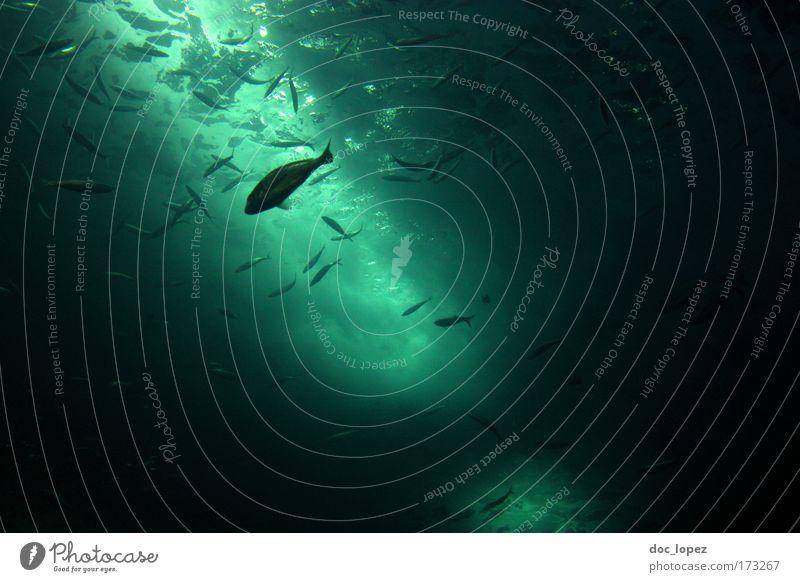 undersea again Farbfoto Unterwasseraufnahme Textfreiraum rechts Textfreiraum oben Bewegungsunschärfe Fisch Angeln tauchen Nordsee Ostsee Meer Teich See Bach