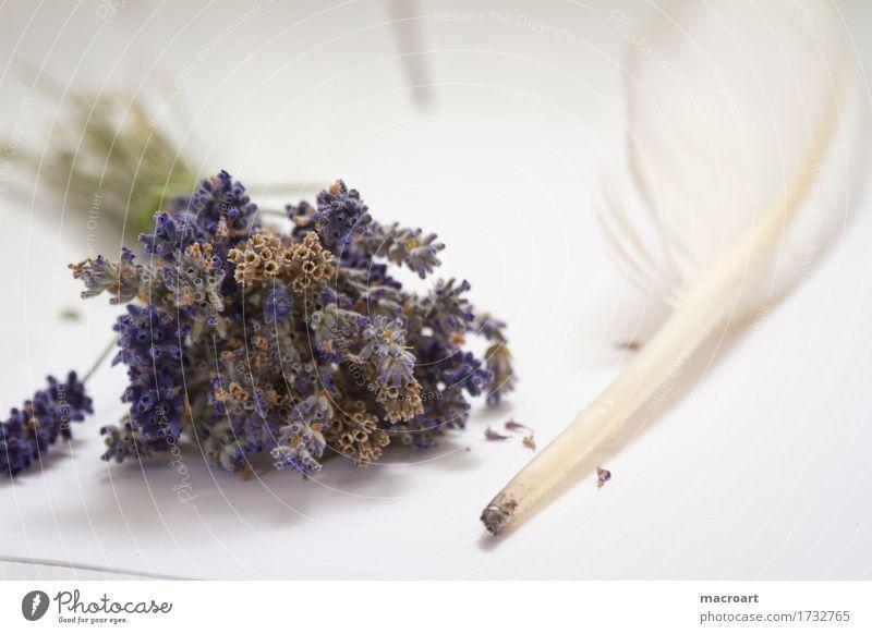 Feder Lavendel schwanenfeder flos Tisch Blume Blüte violett Duft Geruch riechend Holztisch Holzplatte beruhigend beruhigungsmittel Heilpflanzen Medikament Seele