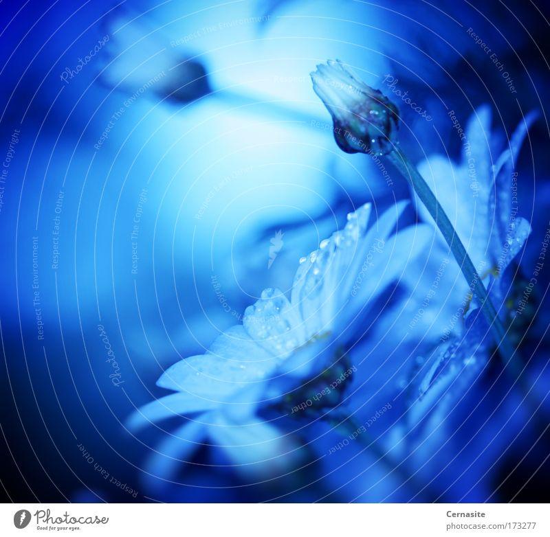 Natur Wasser blau weiß schön Sommer Blume Umwelt Wiese Landschaft Wärme Blüte Regen Feld elegant wild