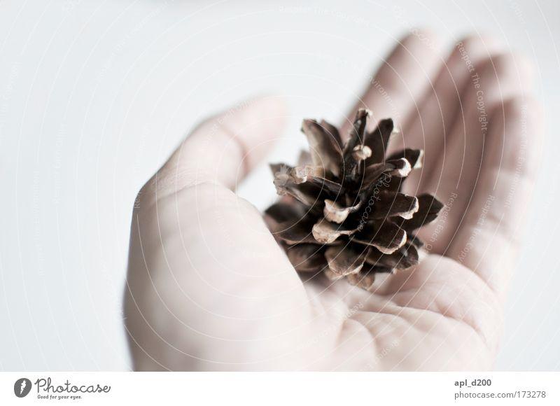 Samenspender Mensch Natur Hand weiß Baum Erwachsene braun ästhetisch Sauberkeit 18-30 Jahre Frieden Reinheit Junger Mann