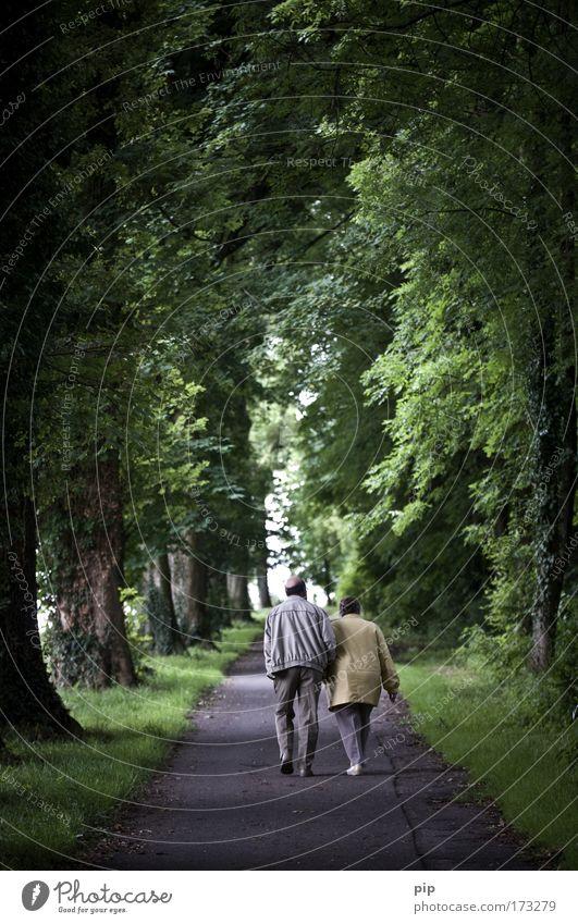 bis dass der tod uns scheidet Farbfoto Gedeckte Farben Außenaufnahme Dämmerung Spaziergang Mensch Paar Senior 2 60 und älter Natur Sommer Baum Park Wald