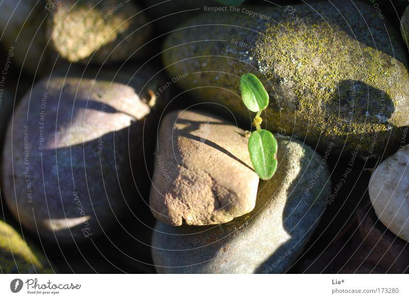 Die Welt ist im Wandel ... Pflanze Einsamkeit Leben Erholung Stein Umwelt Beginn Hoffnung neu Wachstum Zukunft Umweltschutz nachhaltig dezent widersetzen