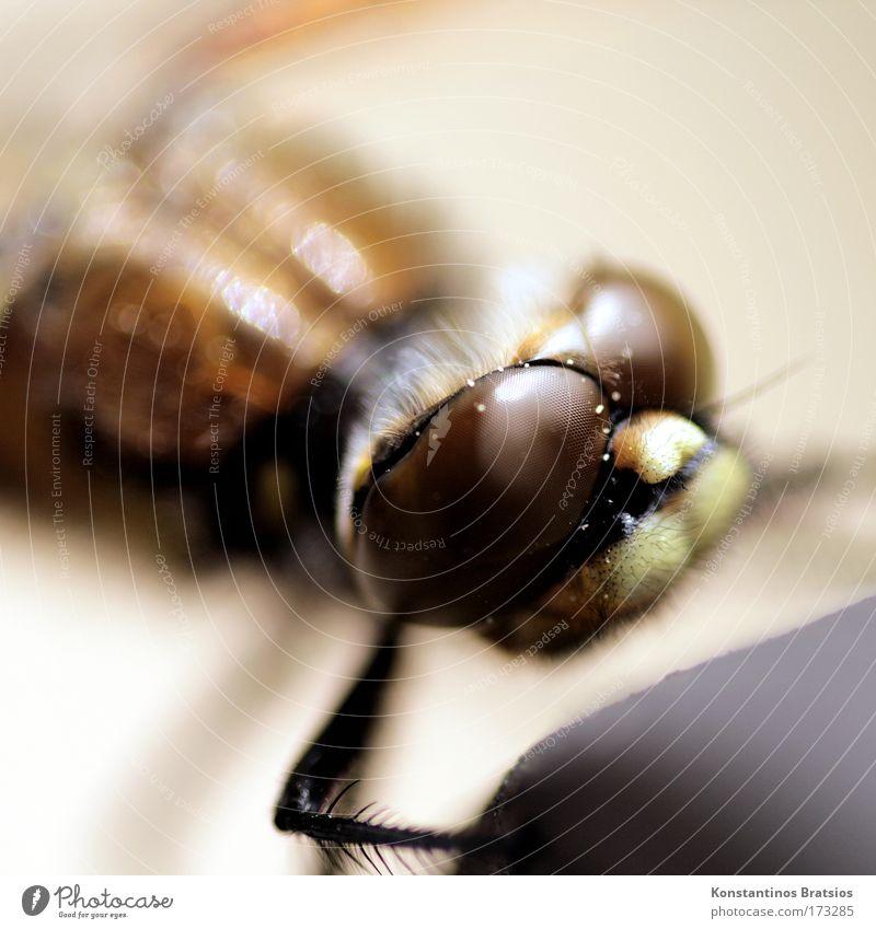 Insektokopter Natur ruhig Tier Leben Kopf Beine Umwelt nah weich Fühler Libelle faszinierend interessant Facettenauge