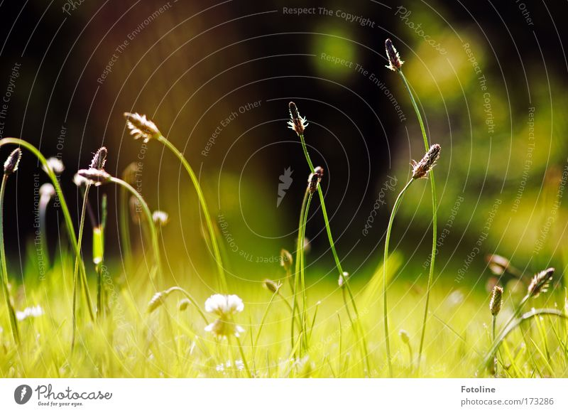 ... und Klee Farbfoto Außenaufnahme Tag Umwelt Natur Landschaft Pflanze Erde Luft Schönes Wetter Gras Blatt Grünpflanze Wildpflanze Wiese Feld ästhetisch Duft