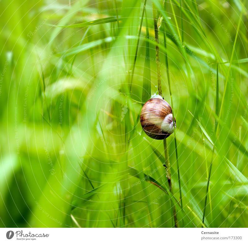 Natur grün schön Pflanze Sommer Tier Umwelt gelb Wiese Wärme Gras hell braun Erde Feld wild