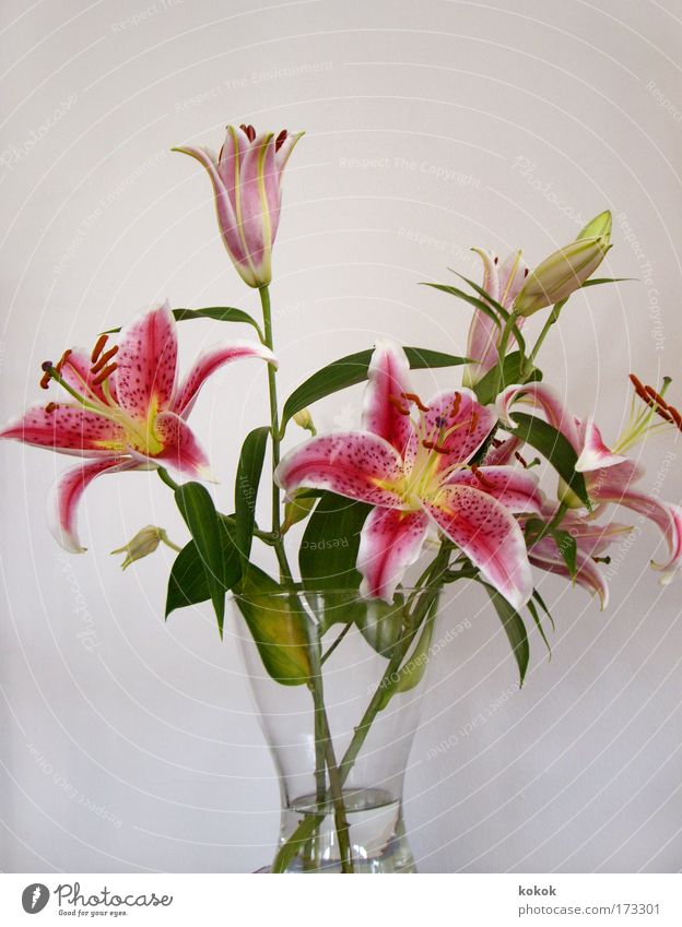Liliengeburtstagsstrauß 03 Wasser schön Pflanze Sommer Erholung Blüte Frühling rosa elegant Geburtstag Lifestyle Blume Dekoration & Verzierung Kreativität Kosmetik Blumenstrauß