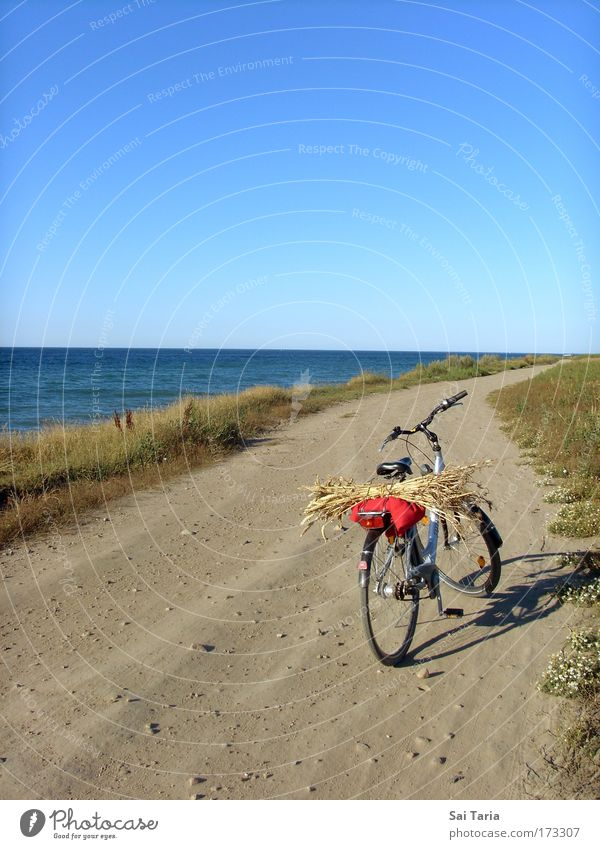 Fahrradtour Farbfoto Außenaufnahme Tag Vogelperspektive Ferien & Urlaub & Reisen Sommerurlaub Landschaft fahren Freude Gelassenheit