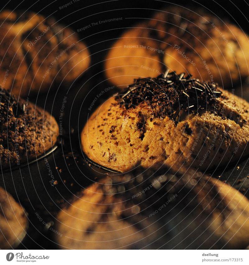 Muffins beim backen zusehen mit Schokoladenstreusel Farbfoto Innenaufnahme Nahaufnahme Menschenleer Kunstlicht Kontrast Schwache Tiefenschärfe