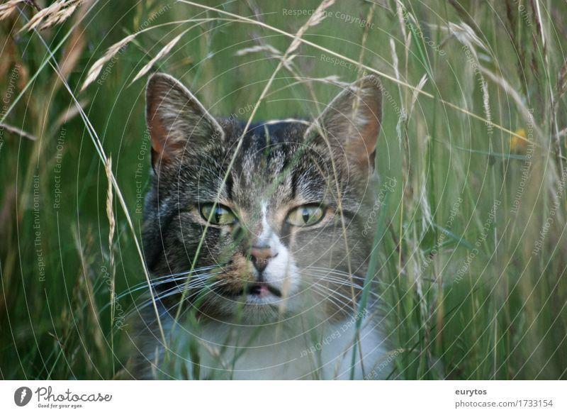 ... Katze Natur Pflanze schön grün Landschaft Tier Umwelt Leben Wiese natürlich Gras Garten Park Wetter Feld