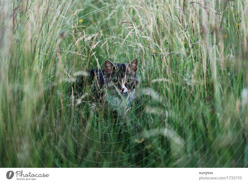 Wildkatze Umwelt Natur Landschaft Pflanze Tier Klima Klimawandel Garten Park Wiese Haustier Wildtier Katze 1 beobachten Glück Treue Tierschutz