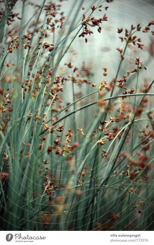 am ufer Natur grün blau Gras Park Seeufer
