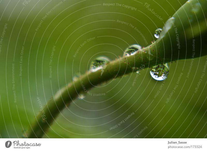 Drops Farbfoto Nahaufnahme Detailaufnahme Makroaufnahme Totale Pflanze ästhetisch Tropfen Scharf Unschärfe grün