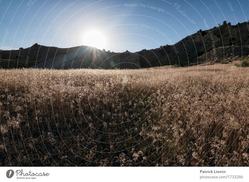 Natur Ferien & Urlaub & Reisen Pflanze Sommer schön Sonne Landschaft Berge u. Gebirge Umwelt Wege & Pfade Wiese natürlich Gras Tourismus hell wild