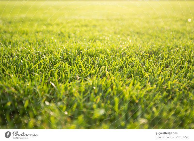 Rasen Gesundheit Gesundheitswesen Wellness Leben Wohlgefühl Zufriedenheit Erholung ruhig Freizeit & Hobby Spielen Fitness Sport-Training Ballsport Golf Fußball