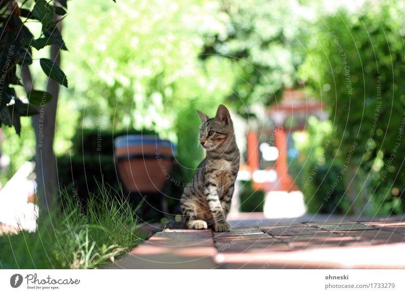 Seitenblick Katze Natur grün Tier Gras klein Garten Park elegant Wildtier Schönes Wetter Haustier Tierliebe