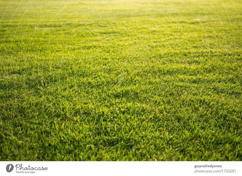Rasen grün Erholung ruhig Leben natürlich Sport Gesundheit Spielen Glück Freizeit & Hobby frisch Geschwindigkeit Fußball Fitness Wellness Wohlgefühl