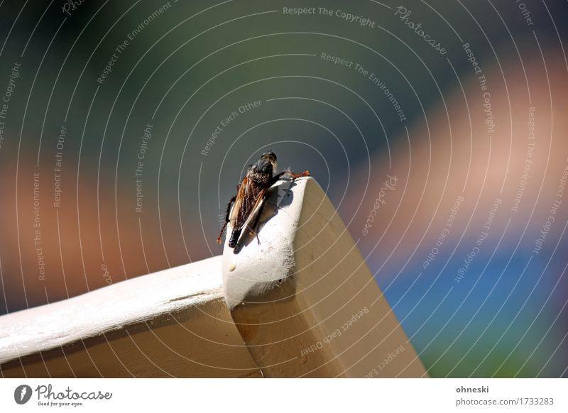 Sonne tanken Tier Sommer Schönes Wetter Wildtier Insekt Zikade 1 Wärme Farbfoto Außenaufnahme abstrakt Textfreiraum rechts Textfreiraum oben Tag Licht
