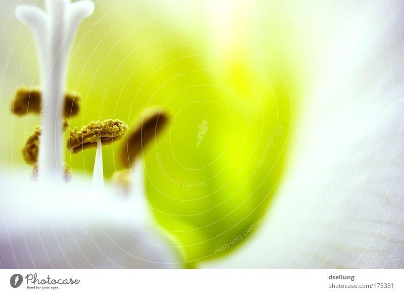 Komischer Wald weiß Blume grün Pflanze gelb frisch natürlich Topfpflanze