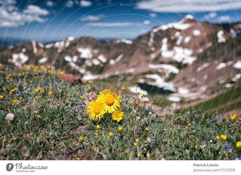 Sommerwiese schön Ferien & Urlaub & Reisen Tourismus Abenteuer Schnee Berge u. Gebirge wandern Umwelt Natur Landschaft Pflanze Urelemente Himmel Wolken Blume