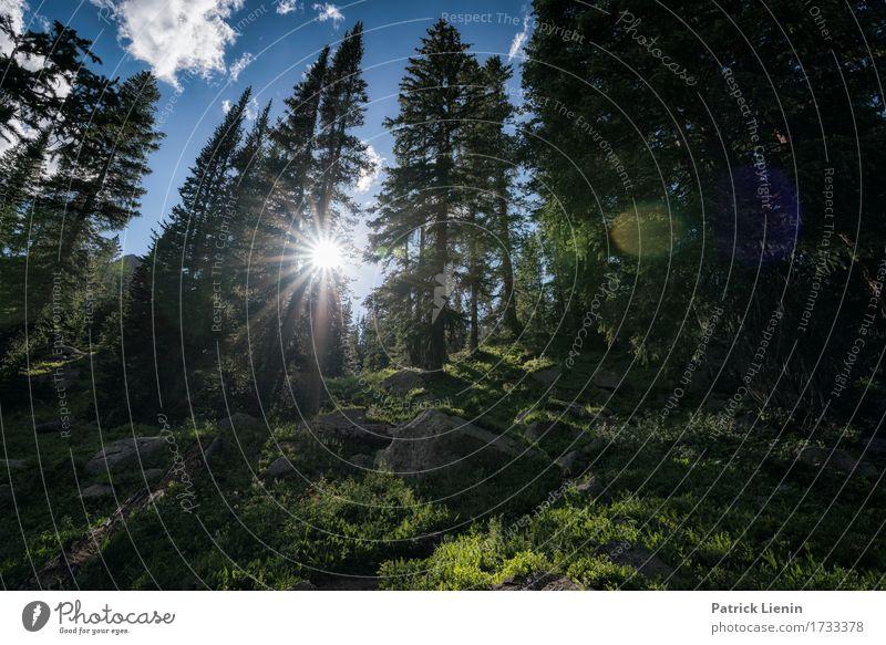 Eagles Nest Wildnis schön Ferien & Urlaub & Reisen Tourismus Abenteuer Sommer Sonne Berge u. Gebirge wandern Umwelt Natur Landschaft Urelemente Erde Himmel