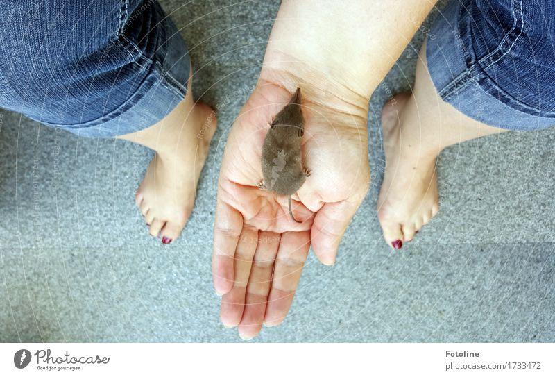 Lebensretter Mensch feminin Frau Erwachsene Haut Arme Hand Finger Beine Fuß 1 Umwelt Natur Tier Wildtier Maus Fell frei hell kuschlig klein natürlich niedlich