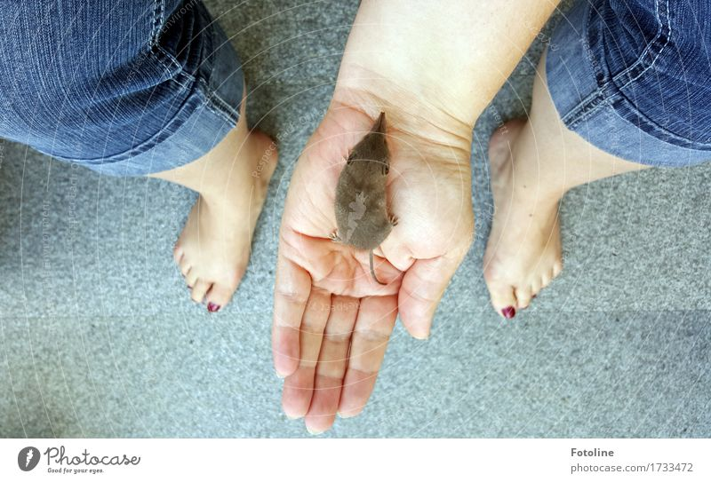 Lebensretter Mensch Frau Natur Hand Tier Erwachsene Umwelt natürlich feminin Beine klein Fuß hell frei Wildtier Arme
