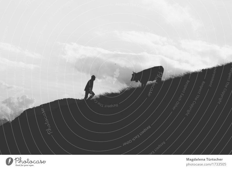 Alpe Umwelt Natur Landschaft Sommer Herbst Unendlichkeit Landwirtschaft Alpen Hirte behüten Mutterkuh Kuh Vertrauen Tier Tierfreund Silhouette Schwarzweißfoto