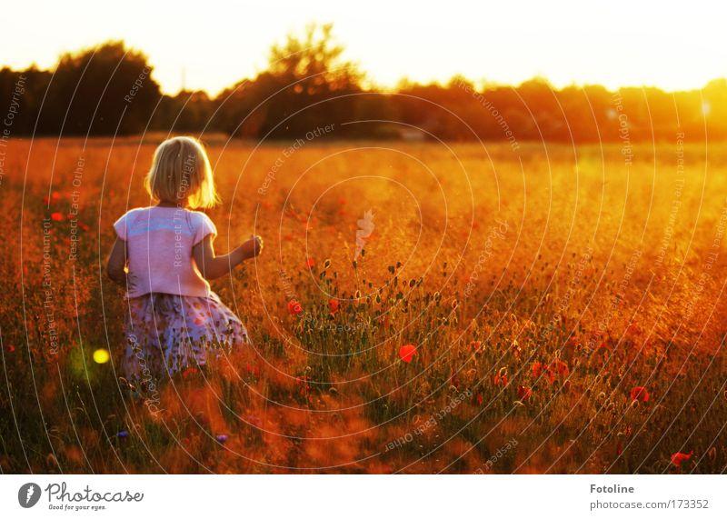 Kleine Elfe Mensch Kind Natur Jugendliche Pflanze Mädchen Sommer Blume Umwelt Wiese Gras Blüte hell Erde Kindheit blond