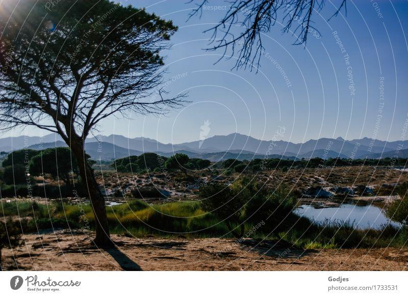 Baum vor einem Hintergrund aus Sträuchern Bergen und blauem Himmel Umwelt Natur Landschaft Pflanze Erde Sand Wasser Wolkenloser Himmel Sommer Schönes Wetter