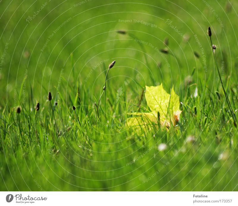 Einsames Blatt Natur grün Pflanze Sommer Blatt Wiese Gras Frühling Park Wärme Landschaft hell Umwelt Erde Duft Schönes Wetter