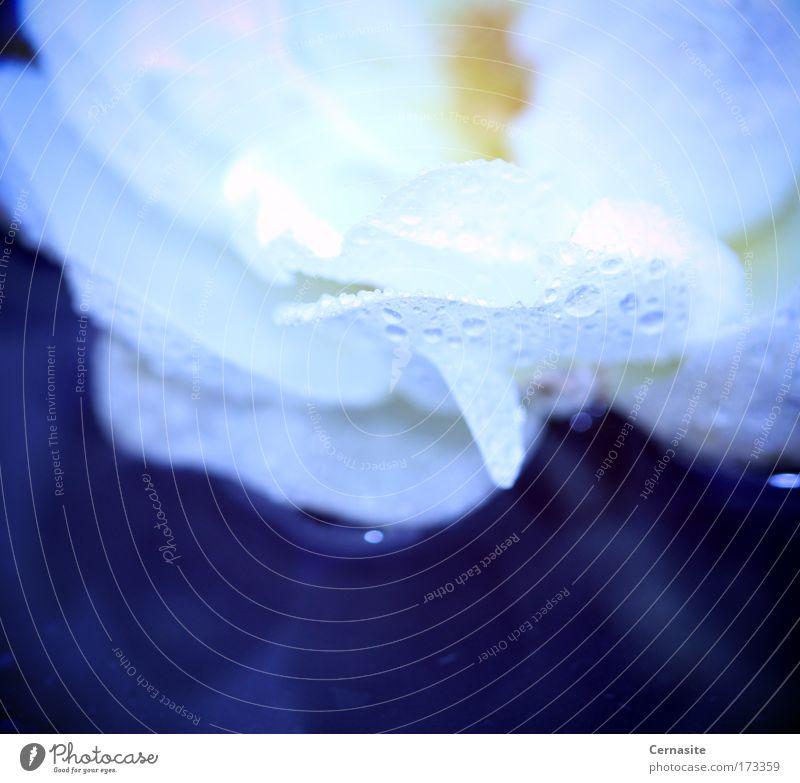 blau Wasser weiß Sommer Blume gelb dunkel Wiese Blüte hell Regen Feld elegant frisch Wassertropfen trist