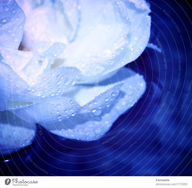 Natur blau Wasser weiß schön Pflanze Sommer gelb Wiese Blüte Park Feld rosa wild elegant nass