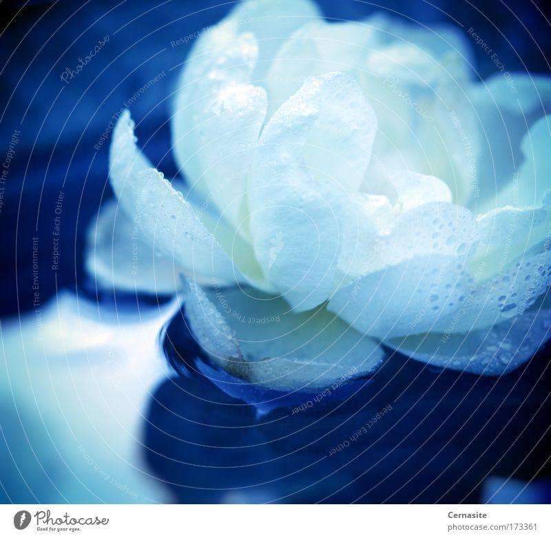 Natur blau Wasser weiß Pflanze Sommer Blume Umwelt gelb Wiese kalt Blüte Park Feld wild elegant