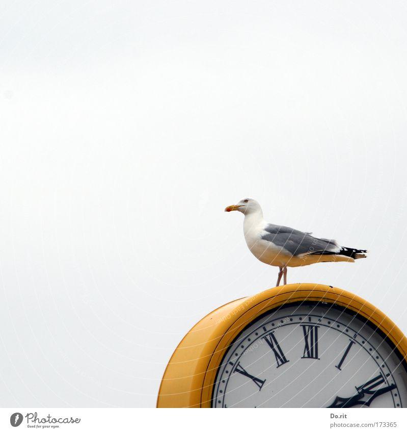 [KI09.1] Punkt 14:11 Uhr Zeitmaschine Messinstrument Luft Himmel Strand Ostsee Tier Vogel Möwe sitzen warten gelb grau weiß Uhrenzeiger Feder römische Ziffern