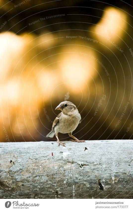 Natur Tier Landschaft Vogel Umwelt