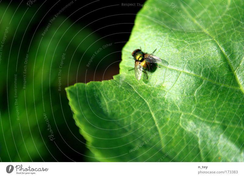 Hallo McFly!!! Natur Pflanze Sommer ruhig Blatt Tier Wiese Stimmung klein Fliege fliegen Wachstum Schönes Wetter Bach geduldig Grünpflanze