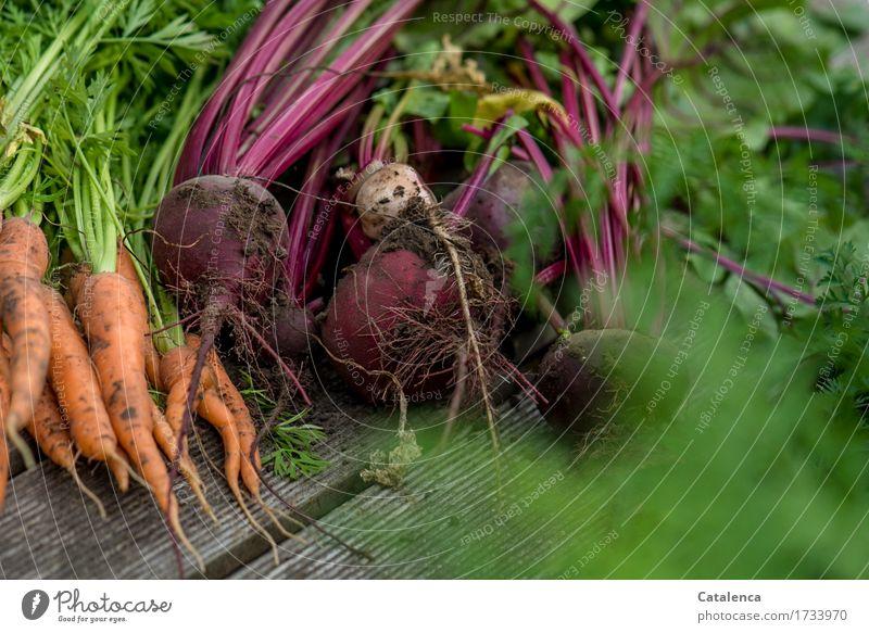 Ernte Natur Pflanze Sommer grün rot Umwelt Gesundheit braun orange Freizeit & Hobby Wachstum frisch Duft nachhaltig Vorfreude Gartenarbeit