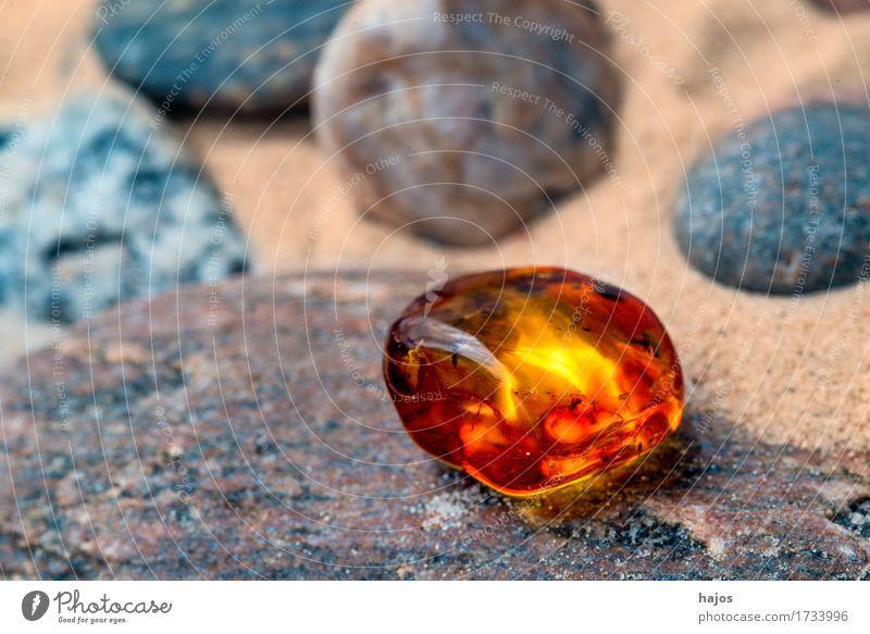 Bernstein am Ostseestrand Alternativmedizin Medikament Strand Stein alt leuchten gelb baltisch Kies Sandstrand Baumharz strahlend Edelstein Halbedelstein