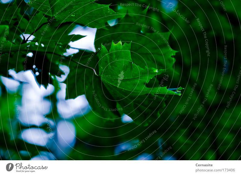 Der Himmel und die Erde Farbfoto Außenaufnahme Nahaufnahme Detailaufnahme Makroaufnahme Luftaufnahme Menschenleer Tag Licht Schatten Kontrast Silhouette
