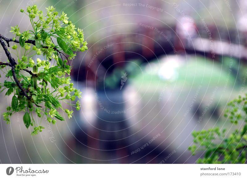 Brücke im Park Farbfoto Außenaufnahme Menschenleer Tag Reflexion & Spiegelung Unschärfe harmonisch Erholung ruhig Sonne Natur Landschaft Pflanze Wasser Frühling