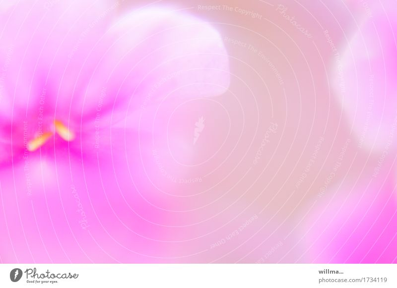 leicht und lieblich Pflanze Blume Blüte Blütenblatt Duft weich rosa Aquarell sanft verträumt zart leuchtende Farben Pastellton Blütenstempel Blütenpflanze
