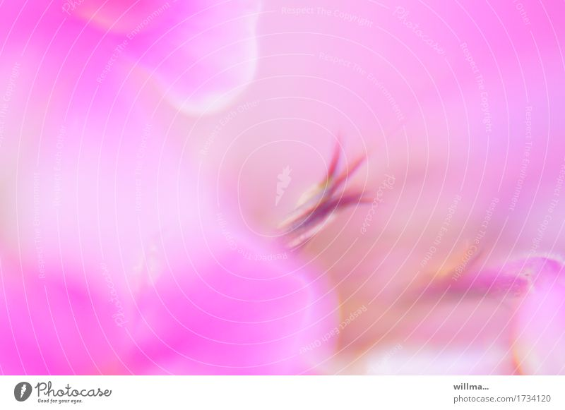 zart-spritzig Pflanze Blume Blütenblatt Blütenstempel weich rosa Aquarell Duft duftig sanft verträumt Pastellton Farbfoto Außenaufnahme Experiment Unschärfe
